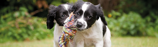 Alle benodigdheden voor een puppy