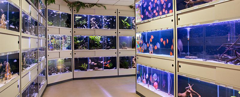 Onze zoetwater aquariumafdeling