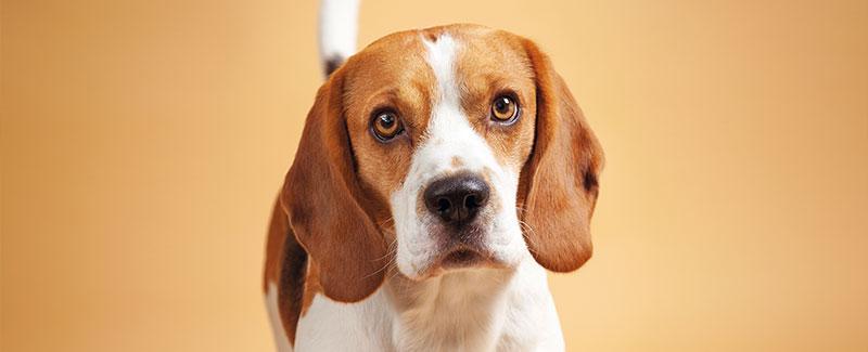 Plast uw hond in huis?