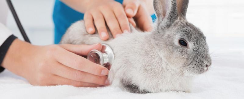 Paginabeeld konijn en knaagdier